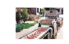 草莓综合清洗流水线